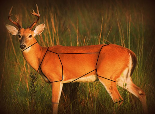 Click a section of the deer to see recommendations for processing and recipes that are optimal for that muscle group.